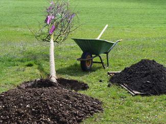 Dillinger Franziskanerinnen pflanzen weltweit Bäume... für jedes Jahr ihrer Geschichte einen!