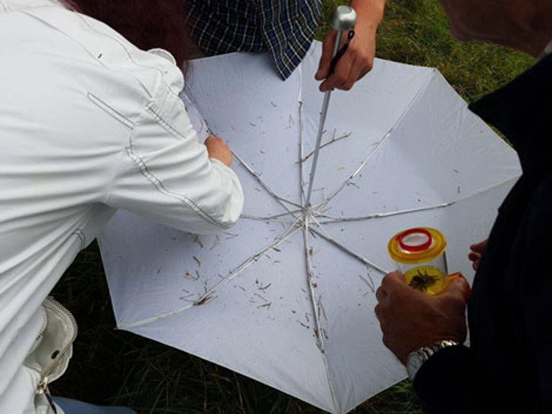 Ein weißer Regenschirm wird zum Fangwerkzeug umfunktioniert.